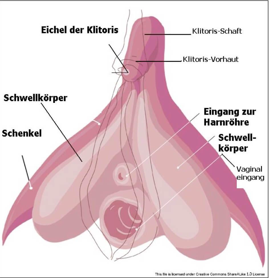 Sex, Anatomie und Weiblichkeit Details